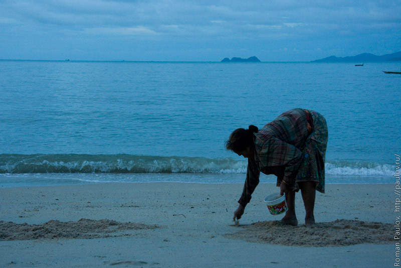 Копатели устриц Таиланд Ко Самуи