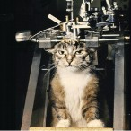 Эксперименты на котах